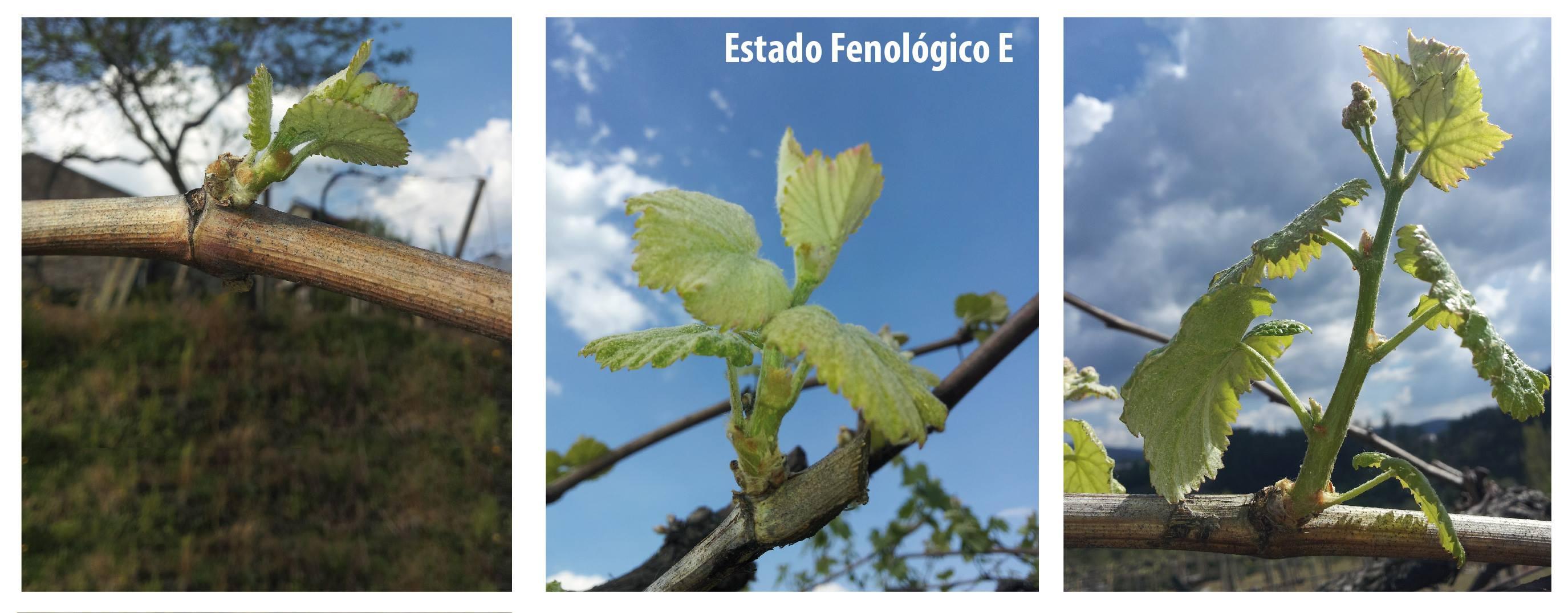 primeras hojas
